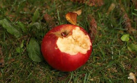 Blogantioxidanten appel 1 Middelen tegen overgangsklachten
